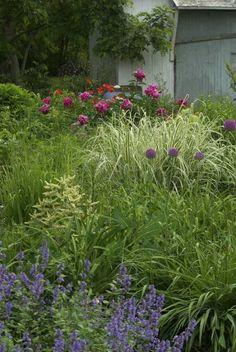 Frugal Gardening Tip