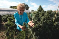 Mary Anne uses cannabis to ease her glaucoma. Up until last fall the 98-year-old had never seen a garden...