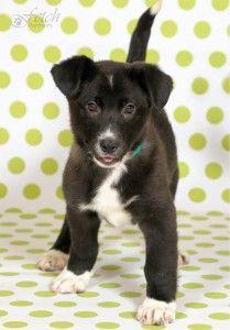 Alsip Nursery dumps puppy mill dogs for adoption. #endpuppymills