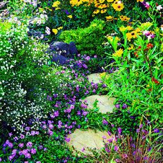 Plants to attract bees and other pollinators