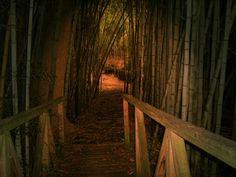 Bamboo Forrest - Prattville, Al