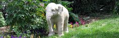 Traditional Paper Mache Tutorials:    Life-Sized Baby Elephant Sculpture: