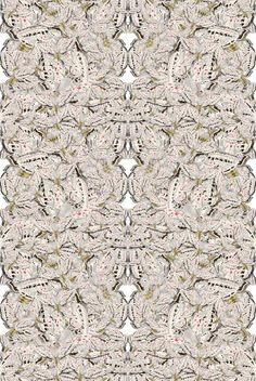 White Moth Allover Solid Wallcovering - Timorous Beasties