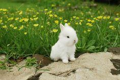 Little baby rabbit: The essence of 'cute' #cuteness #cute #rabbit