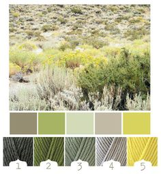 living rooms, room colours, bathroom colors, desert plants, family rooms, color stories, desert flowers, colour palettes, shades of green