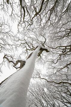 tree monster, awesom natur, winter trees, inspir, beauti art, bw natur, baggaley, amaz tree, photographi
