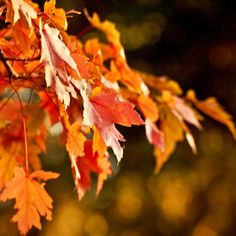 Autumn Leaf, Fall Fine Art Metallic Photograph
