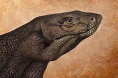 """Handimals:"" Guido Daniele Paints Strikingly Realistic Animals on Hands"