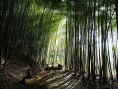 Miharu, Fukushima, Giappone Fotografia di Teruo Araya
