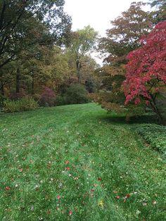 Autumn landscape print for purchase
