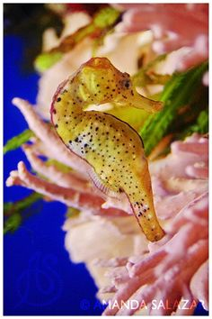 Great little seahorse
