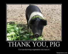 Thank You, Pig - Demotivational Poster