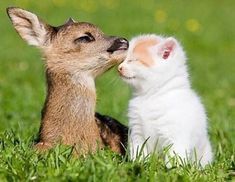 Two Baby Furry Friends