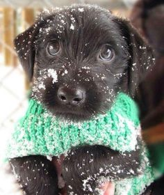 A snowy puppy with a sweater!?
