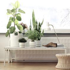 white pots + architectural plants