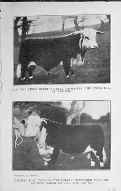 -1919 King's Hereford