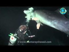 """Wild Dolphin """"Asks"""" Divers to Help Free Itself from Hook - Incredible and inspiring!"""
