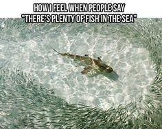 Plenty of fish in the sea . . .