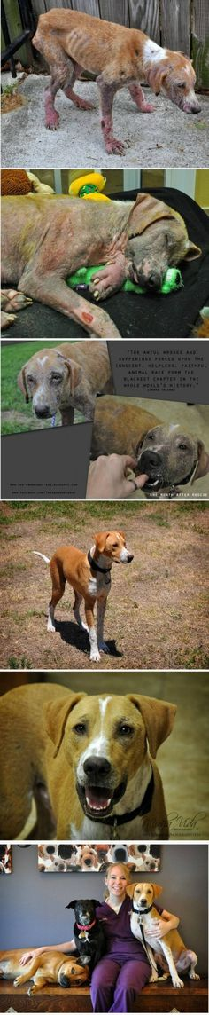 This time it is a life story with 6 pictures!  Helping homeless and abused animals <3 can do wonders!
