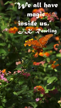 """""""We all have magic inside us.""""  J.K. Rowling – Butterfly in Tucson, Arizona by F. McGinn -- Explore the strength and inspiration that underlies the writing process at http://www.examiner.com/article/forty-quotations-for-writing-inspiration"""