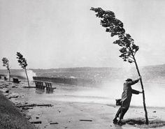 1954 | A passerby holds on to a tree for support as hurricane swept waves hammer the sea wall adjacent to the Belt Parkway near 72nd Street in Brooklyn. The New York area and the New Jersey coastline were battered by Hurricane Carol as heavy rains and fierce winds disrupted power lines, felled trees and tangled air and highway traffic.