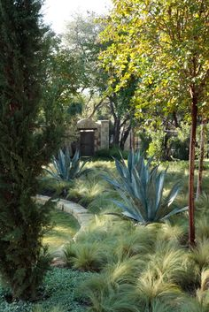 Love the contrast between the soft grass and the bold Agave