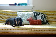 dachshund and pillow