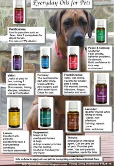 Essential Oils  Pets