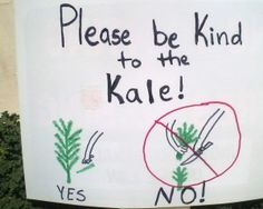 Kale 101: Basic care and Harvesting tips – Our Green Thumb