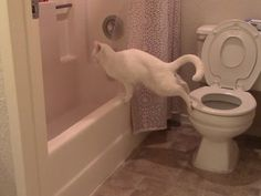 This Funny Cat Discovers A Whole New Way To Poop