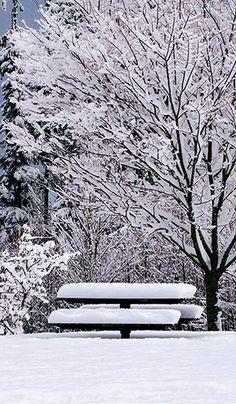 The Winter Solstice - Seattle, Washington