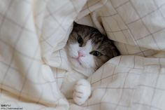 No, I won't leave my bed!!!