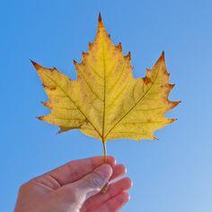 Leaf by Todd Herbert II