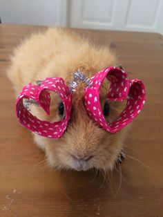 Heart Shaped Glasses on a guinea pig, cat and dog