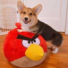 Me and Angry Bird