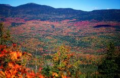 For the leaf peepers in Maine...