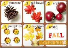 Seek-n-Find Fall Sensory Bin w/free printable {mama♥miss} ©2012
