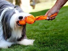 The Best Toys for Dogs >> http://www.diynetwork.com/decorating/the-best-toys-for-playful-cats-and-dogs/pictures/index.html?soc=pinterest
