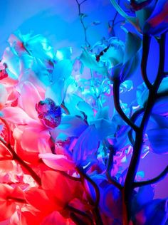 """Torkil Gudnason. """"The fashion photographer uses exaggerated lighting and colored filters to amplify the verdant fragility of the flowers and plants he photographs."""""""