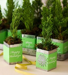 little evergreens in tin containers for your guests....Present holiday guests the gift of nature with a evergreen sapling