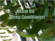 Neem Oil Deep Conditioner