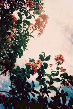 I see flowers in the sky