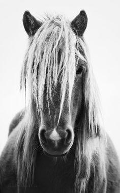 Gorgeous black and white horse photo