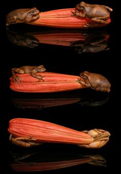 Red Lily netsuke • by woodcarver Janel Jacobson