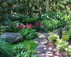 Hostas & hydrandeas - love the shade garden