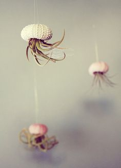 Jellyfish Air Plant and Sea Urchin // tiny cute exotic house plant shell hanging art