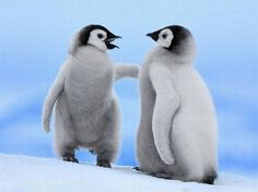 tags, peta, friends, cutest babies, wallpapers, babi penguin, penguins, baby animals, animal babies