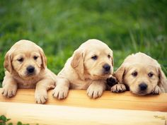 It seems that these adorable doggies are waiting for their friends!