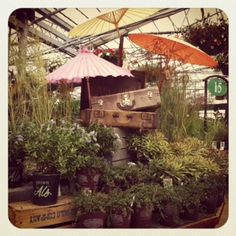Love the vintage feel of the luggage and umbrellas.  The plants -- a given!