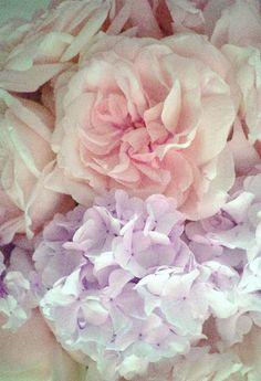 Flowers hydrangeas lilac lavender pale pink ponies ladylike blooms